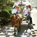Mekong Delta Budget tours - Sunshine Travel