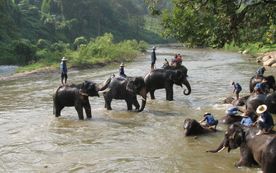 Elephant camp in Luang Prabang