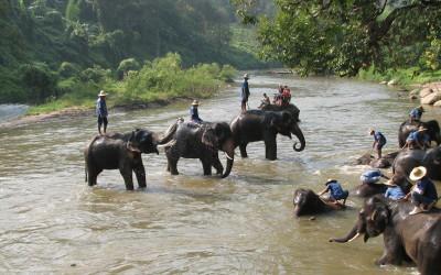 Elephant camp in Luang Prabang
