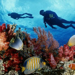 Diving tour in Phu Quoc island 2
