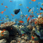 Diving tour in South Phu Quoc island2